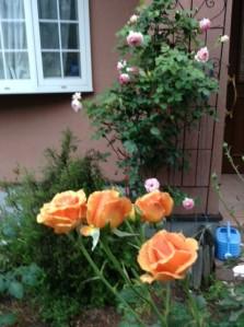 rosesaharaphoto