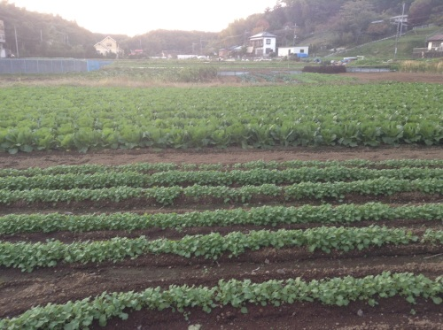Fall vegetable plantings in the runup to winter