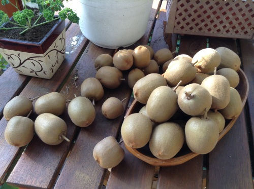 Golden fleshed  kiwis